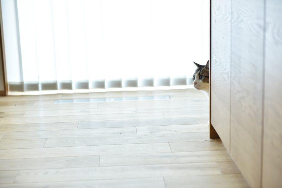 8/22(土)【マイ工務店】「愛猫と暮らす2Fリビングの家」構造見学会